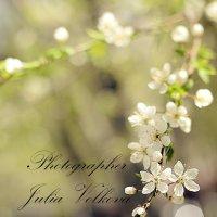 Весна :: Julia Volkova