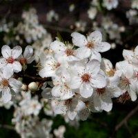 Пока цветочки.. :: Антонина Гугаева