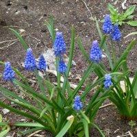 Цветы у дома :: Наиля