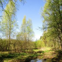 Возле леса :: Андрей Снегерёв