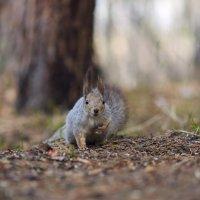 Зуб даю - не брала я ваши орехи! :: Сергей Адигамов