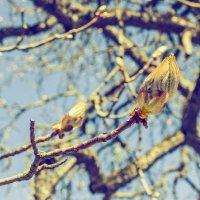Весна! Все готово :: Marina Talberga