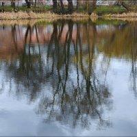Зеркало природы. :: Anatol Livtsov