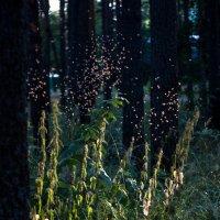 Маленькие лесные эльфы 2 :: Клиентова Алиса