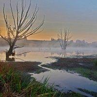 Деревья в утреннем тумане :: Дубовцев Евгений