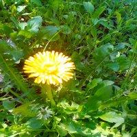 маленькое солнышко :: SoNata_78