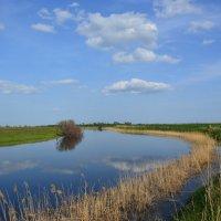 Весна на пруду. :: Виктор ЖИГУЛИН.