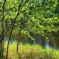 К летним дням торопится листва... :: Лесо-Вед (Баранов)