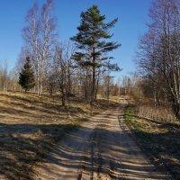 Утренняя весенняя дорога :: Владимир Гилясев