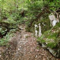 Путешествие по лесным тропам :: Денис Масленников