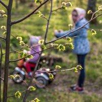 Смотри: весна крючком листочки вяжет :: Ирина Данилова