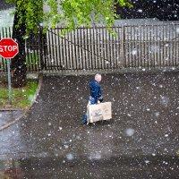 Причуды майской погоды. :: Оксана Пучкова