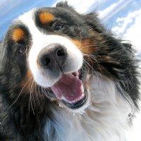 так могут смотреть только собаки :: Наталия Кожанова