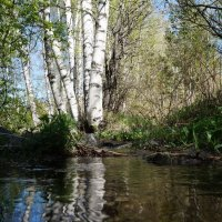 весна на Алтае :: Alexandr Staroverov