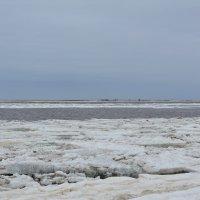 Белое море ледоход. Северодвинск, о.Ягры. :: Михаил Поскотинов