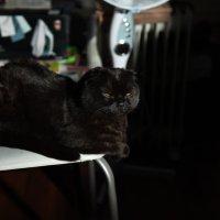 Мой кот Арчибальд :: Алексей Солодовников