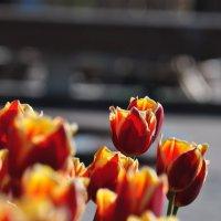 Цветы :: Анна