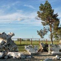 Сад камней в сельской школе в Лабинском районе Краснодарского края :: Андрей Майоров