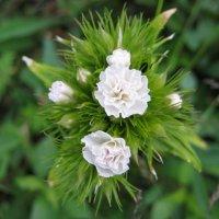 цветы :: Letta KO ..