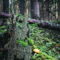 Дремучий лес :: Маргарита Си