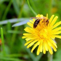 Собирает пчелка летнее тепло,чтоб оно зимою нас согреть могло. :: Валентина ツ ღ✿ღ