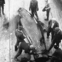 """Атлантический океан 1971-й год.БМРТ-319 """"Рудольф Блауманис"""" :: Иволий Щёголев"""