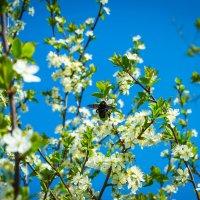 Сладкий нектар 2 :: Мария Букина