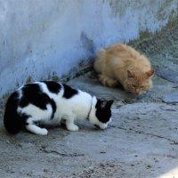 Коты :: Людмила Монахова