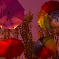 солнечные теги :: Роза Бара