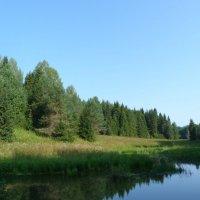 Лес на речном берегу. :: Марина Китаева