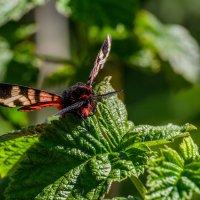 Ночная бабочка. :: Владимир M