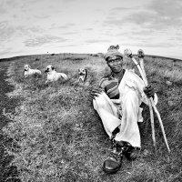 Пастушок :: Roman Mordashev