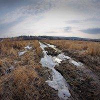 Череп на дороге :: Валерий Талашов