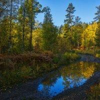 Лесная дорога :: vladimir Bormotov