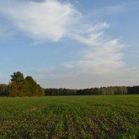 Весеннее поле :: Сергей Щеглов
