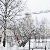 Зима вернулась :: Viktor Pjankov