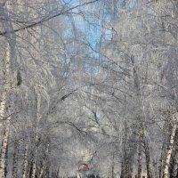 зимним утром :: °•♫•°❤ღ๑•°