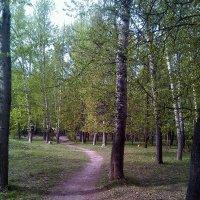 Извилистая дорожка в парке :: Tarka