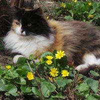 Кошка :: Валентина Юшкова