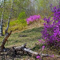 Яркий май :: Людмила Фил