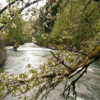 Горная река :: Аlexandr Guru-Zhurzh