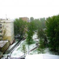 Снегопад в Москве  8 мая 2017г. :: Владимир Драгунский