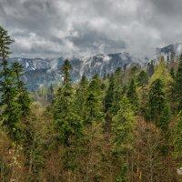 В горах Адыгеи :: anatoly Gaponenko