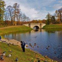 Дети и птицы у Карпина пруда... :: Sergey Gordoff