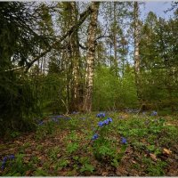 Весна :: Владимир