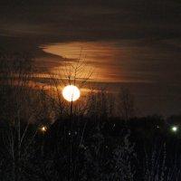 лунная ночь :: оксана