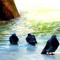 Май,утро у фонтана... :: Тамара (st.tamara)