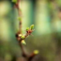 #весенняявесна :: Анастасия Стародубцева