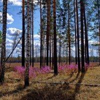 Цвета весны :: Евгений Карский