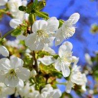 Этот вешний, наш весенний сад. :: Валентина ツ ღ✿ღ